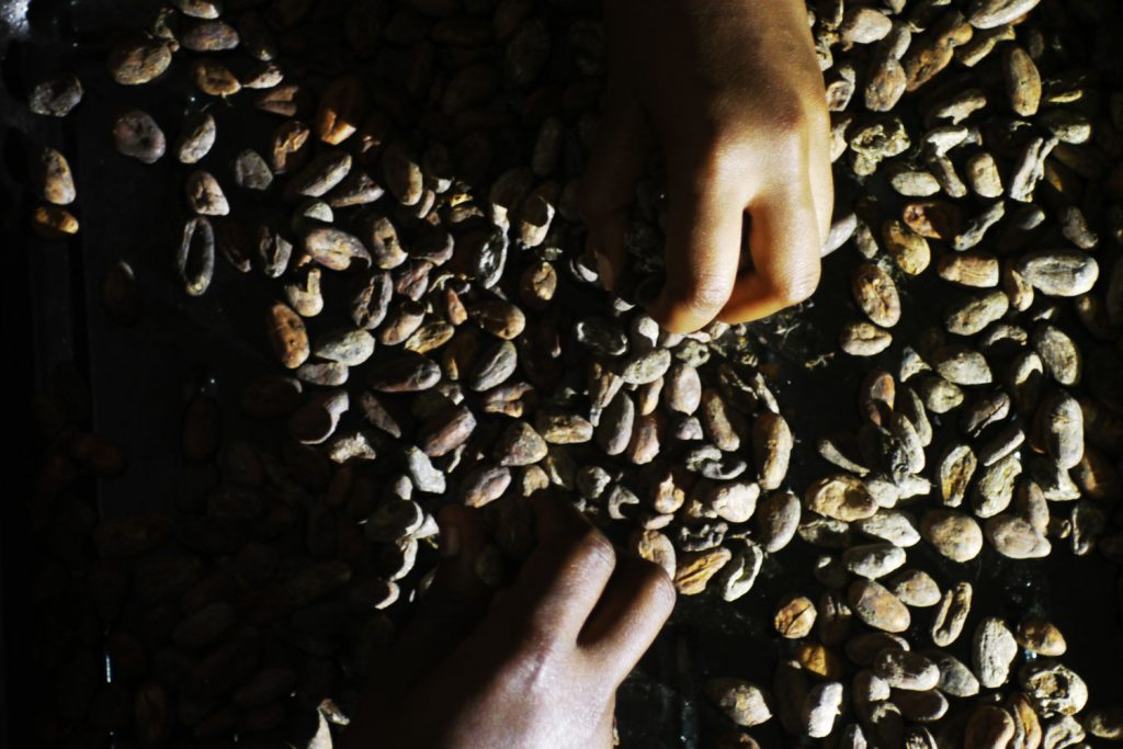 Sorting cocoa beans